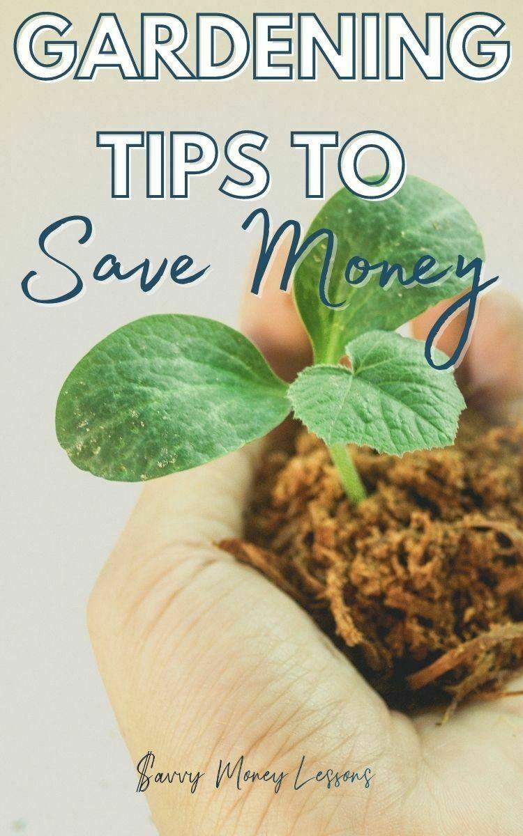 Gardening Tips to Save Money